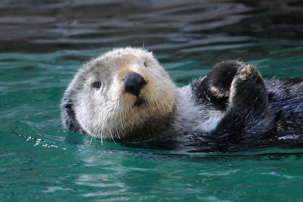 SeattleAquarium_otter