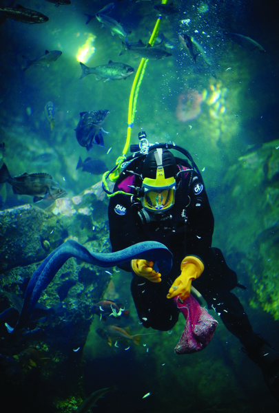 SeattleAquarium_diver