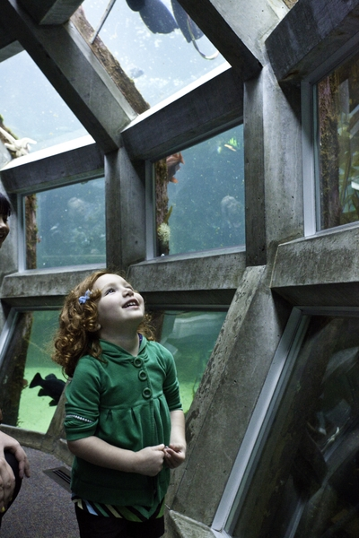 SeattleAquarium_child