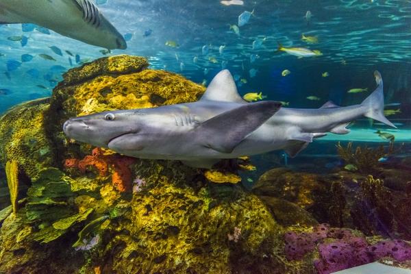RipleysAquarium_shark3