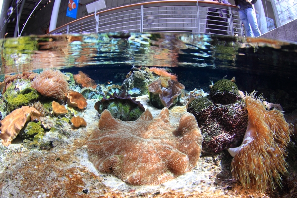 shallow_reef_Will Love