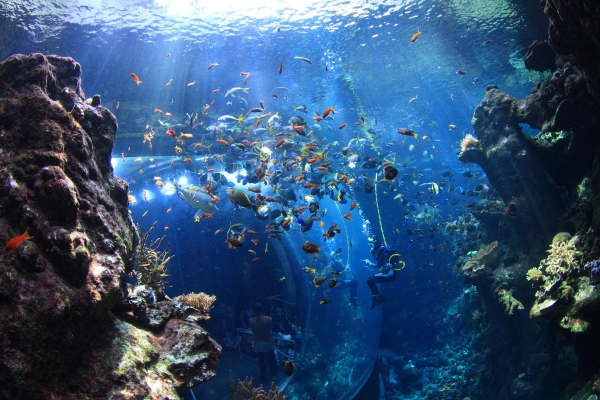 coral_reef_diver_Will Love