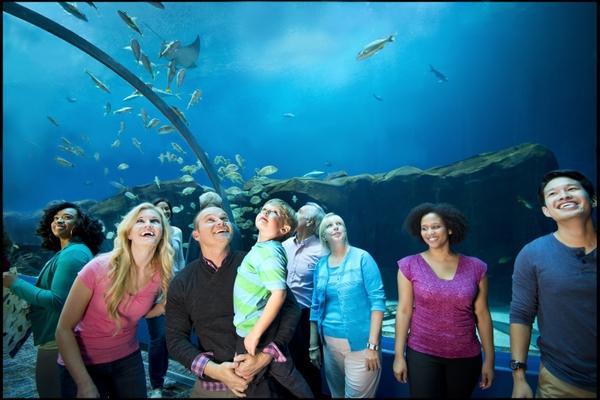 Ocean Voyager Tunnel_GA Aquarium