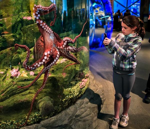 Seattle Aquarium 4