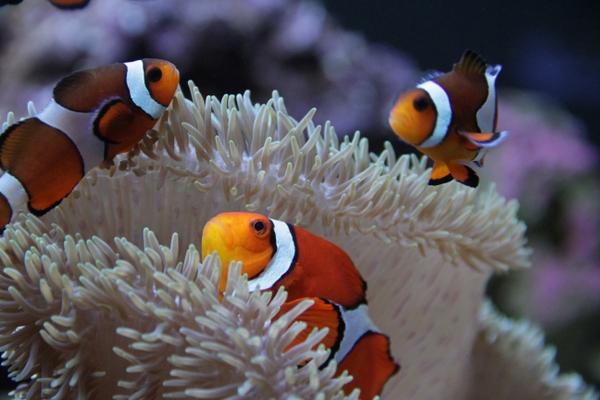 Seattle Aquarium 2