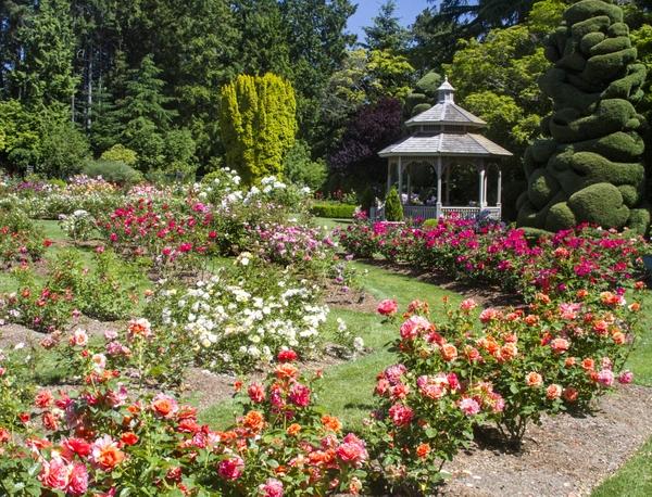Rose Garden Dennis Dow