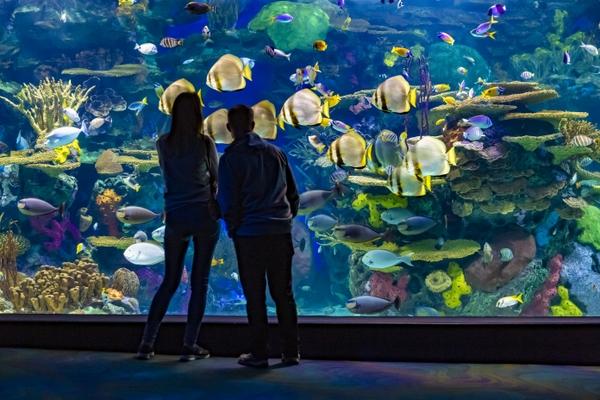 Ripley's Aquarium of Canada Joins the Toronto CityPASS Program