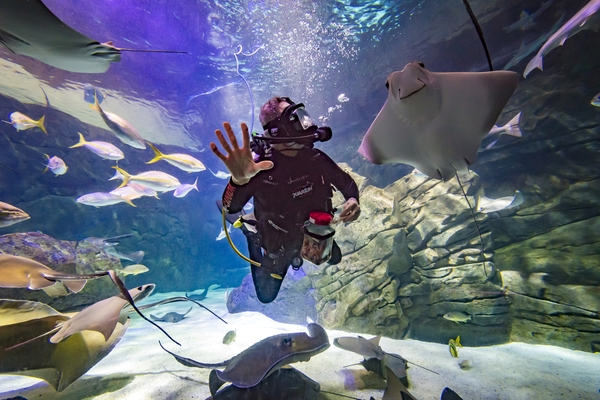 Diver_RAY_5_small