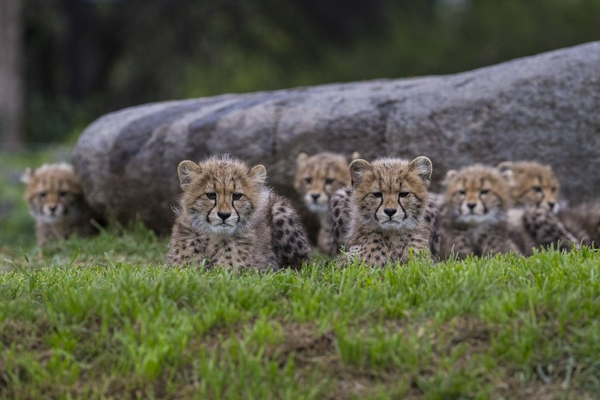 San Diego Zoo® & Safari Park