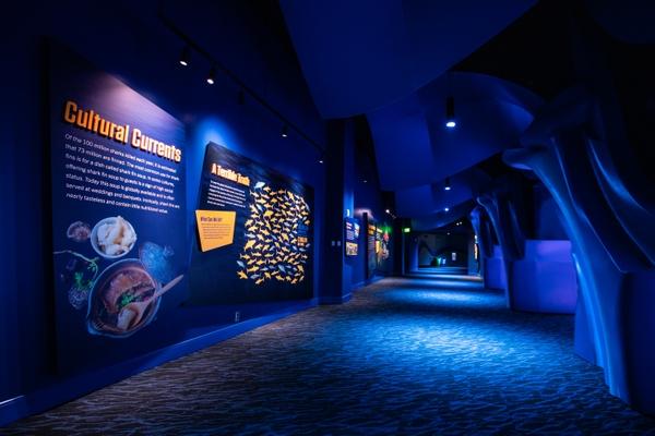GAQ-Shark-Exhibit-152