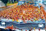 fall leaves on vintage car