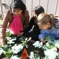 [Merced Sun Star] Merced Students Learn Science Via Community Garden