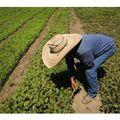 [California Health Report] Video: Angelinos reclaim public space for gardens