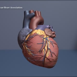 Beating Heart (Loop)