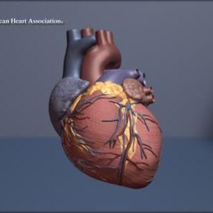 Beating Heart (Loop)