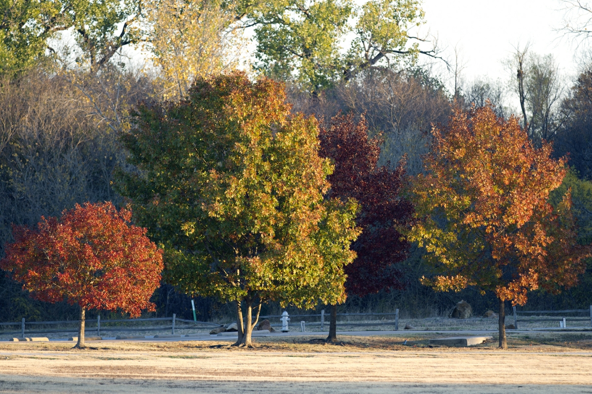 Fall colors - Trees