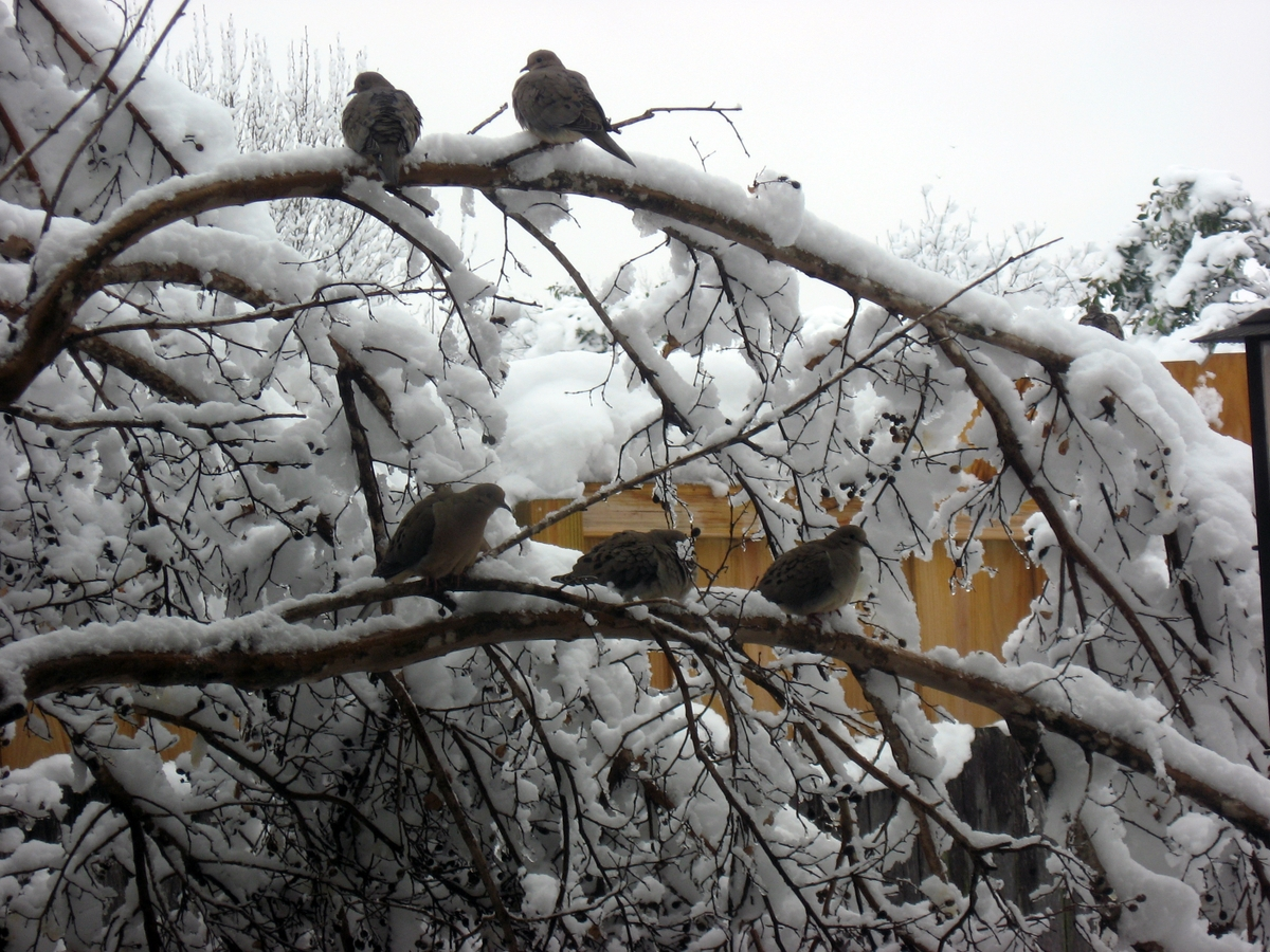 Winter Birds in Snow