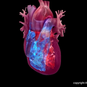 Heart Chambers (transparency) animation