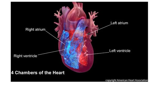 cardiovascular related deaths higher for u s hispanics who live in