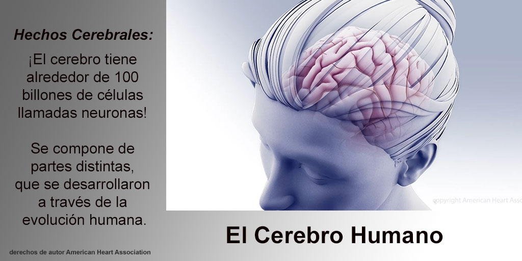 Brain Facts - Spanish