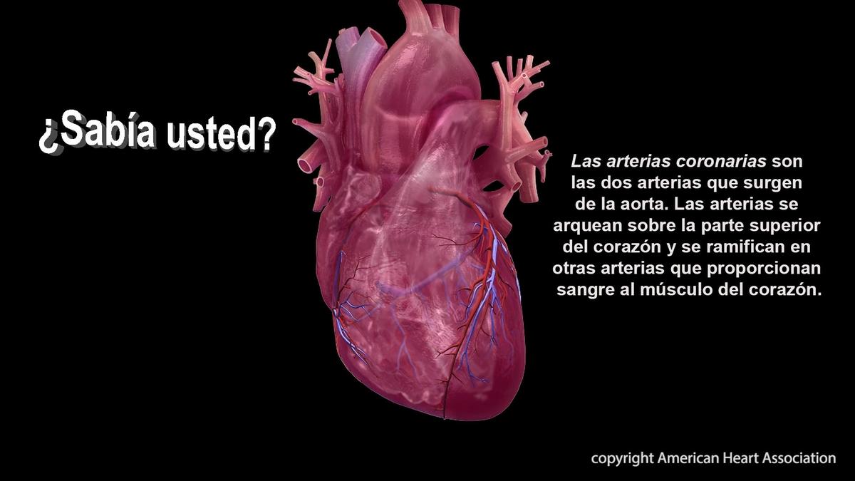 Coronary Artery- Spanish