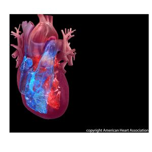 Top Science Tip Sheet on heart failure, heart muscle cells, heart attack and atrial fibrillation research