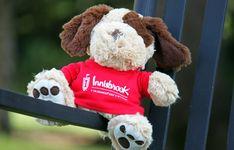 Innisbrook Dog