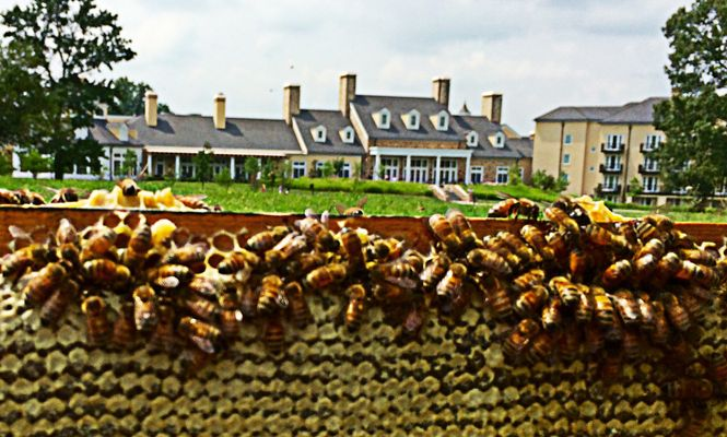 SRS - Honeybees