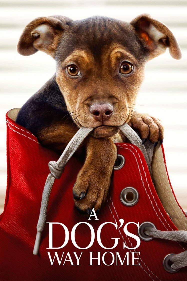 """A Dog's Way Home"" movie poster"
