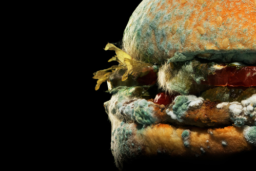 Image for Burger King thinks moldy Whoppers will get you to buy more burgers