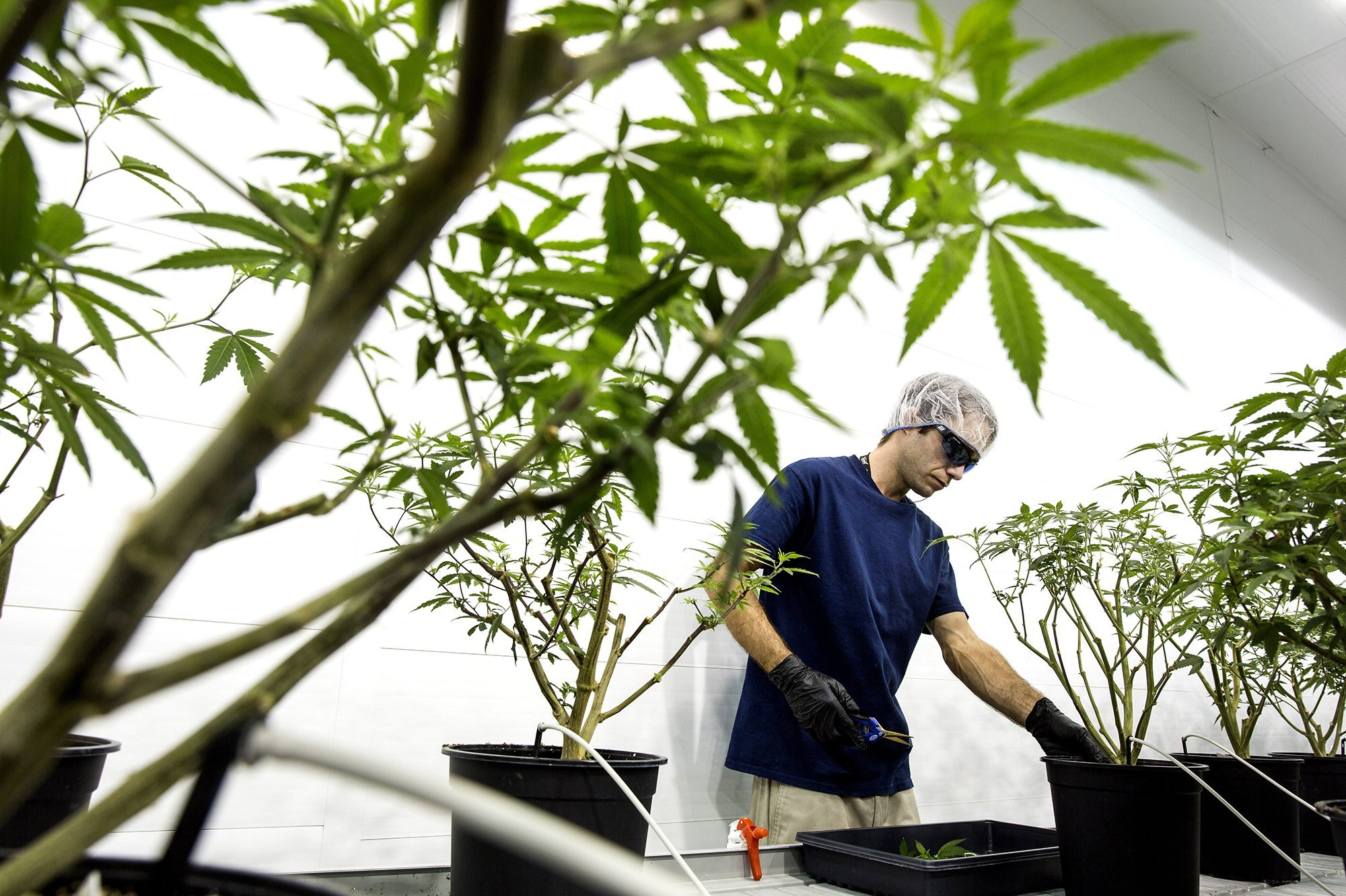 Pot company Canopy chooses CFO of top investor to be new CEO