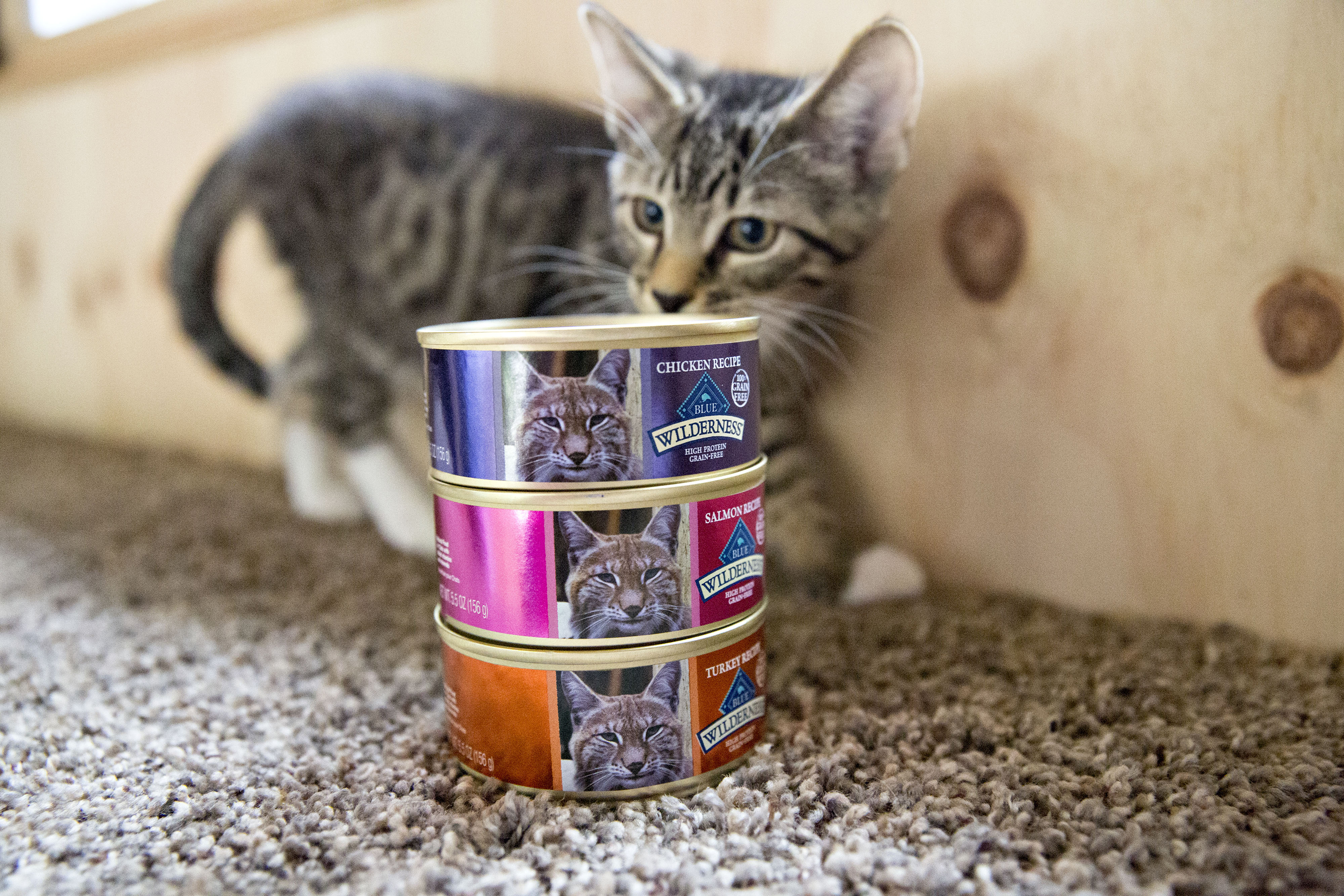 Americans are panic buying food for their pets