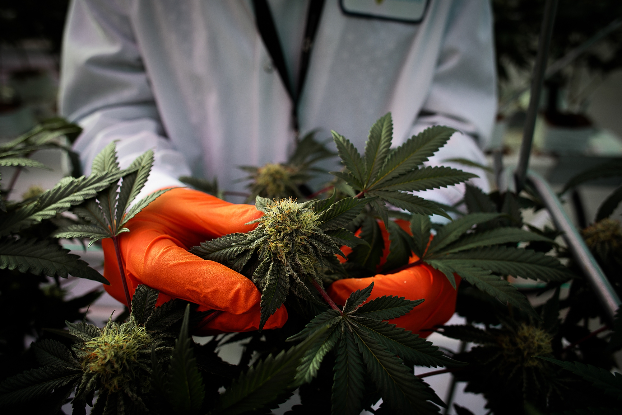 This cannabis stock is a new Reddit favorite