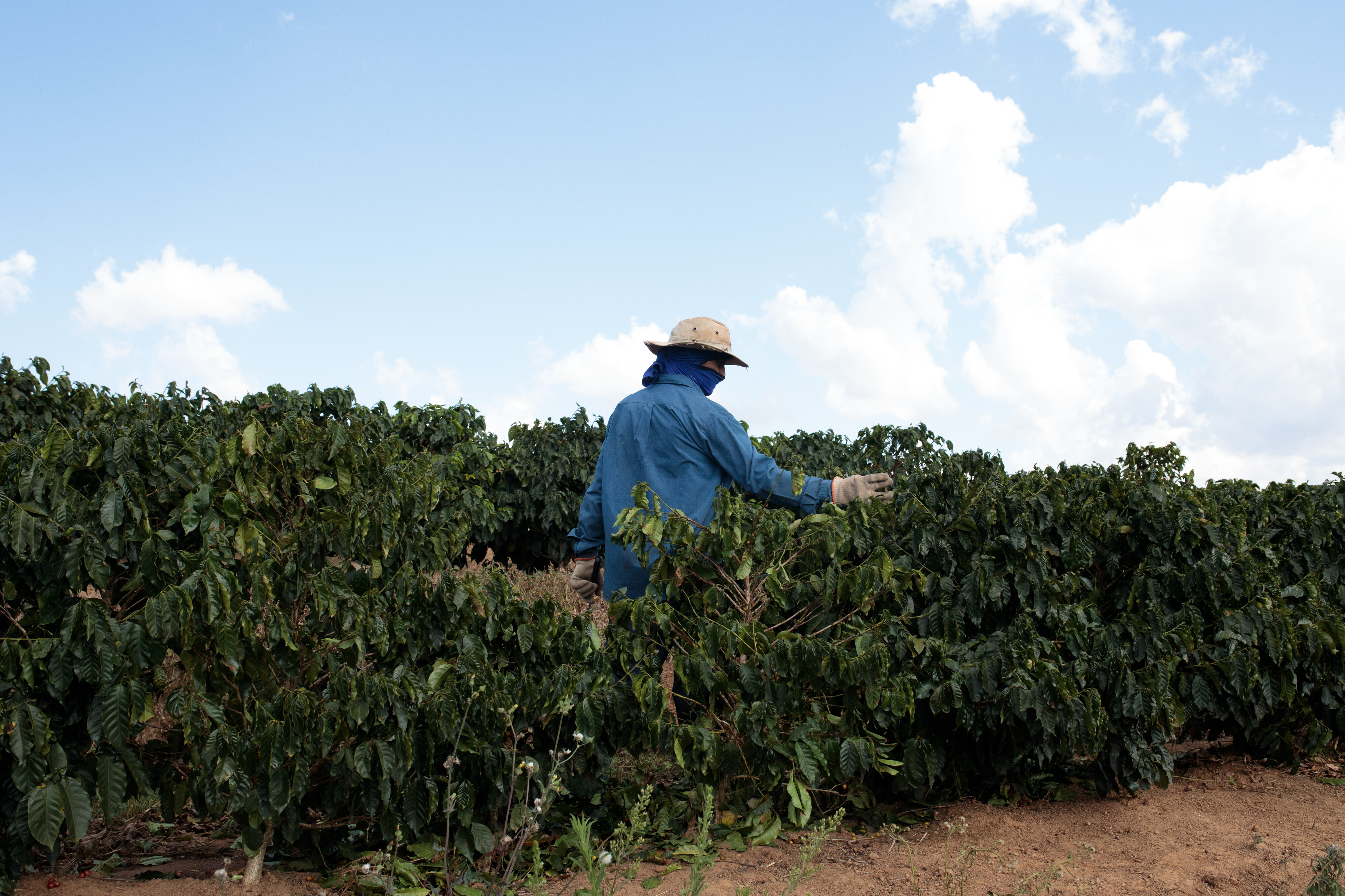 Coffee prices haven't been this high in 4 years
