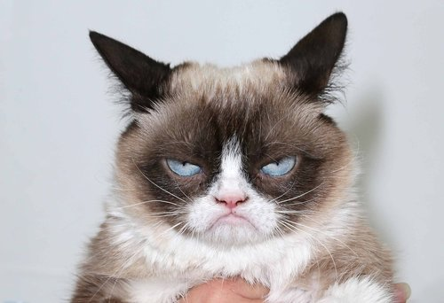 Image for Grumpy Cat, the grouchy-faced furball that launched a thousand memes, is dead