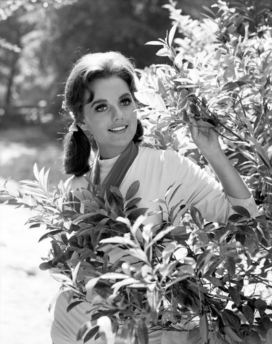 Image for Dawn Wells, Mary Ann on 'Gilligan's Island,' dies of Covid-19 complications at 82