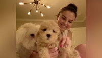 Selena Gomez and Miley Cyrus adopt puppies while they isolate at home