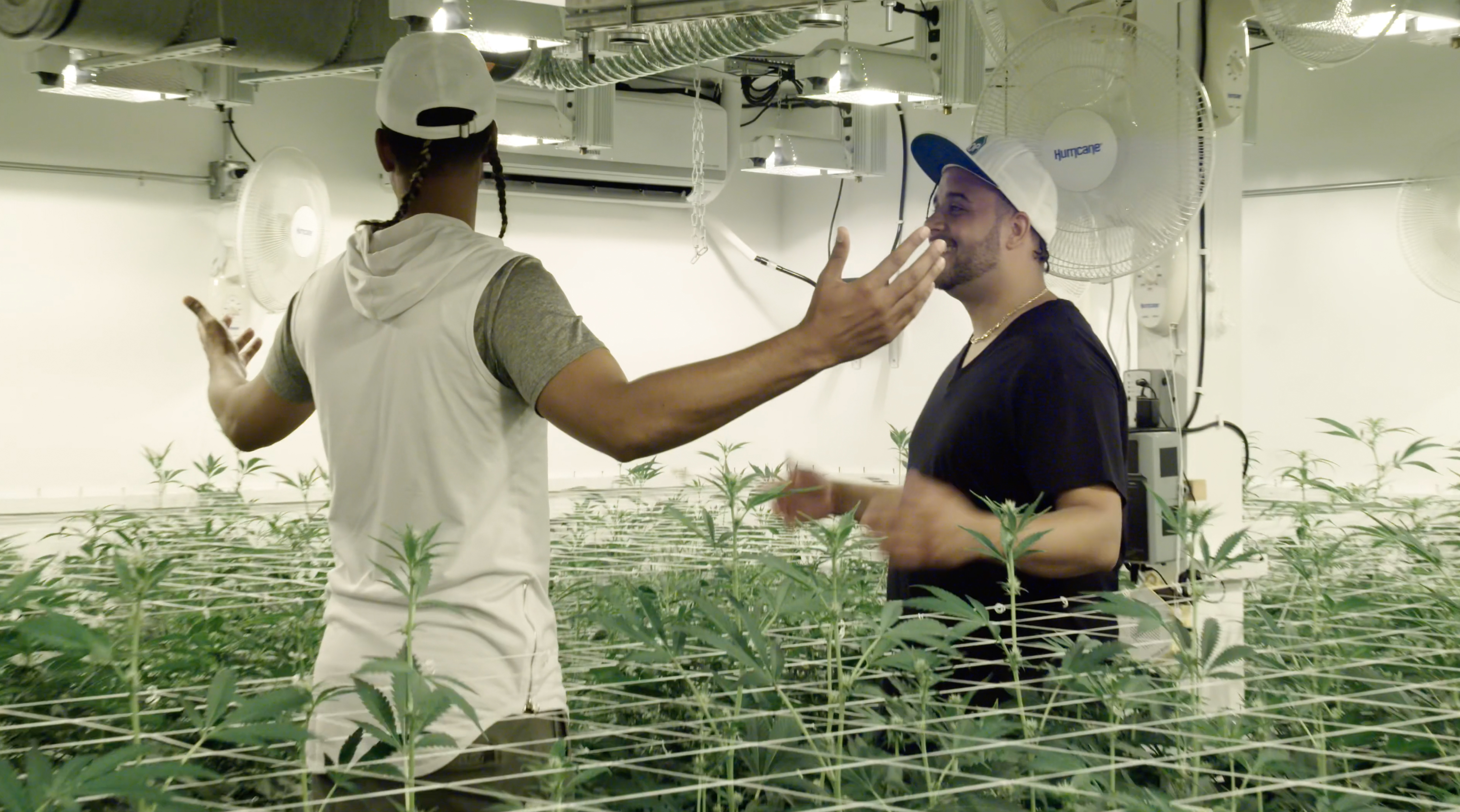 'The Next Marijuana Millionaire' mixes cannabis and reality competition