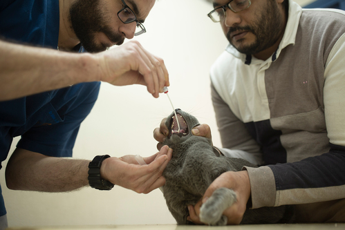 Image for Two cats in New York are first pets known to have coronavirus in the US