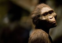 Don't tell 'Lucy,' but modern-day apes may be smarter than our evolutionary ancestors, scientists say