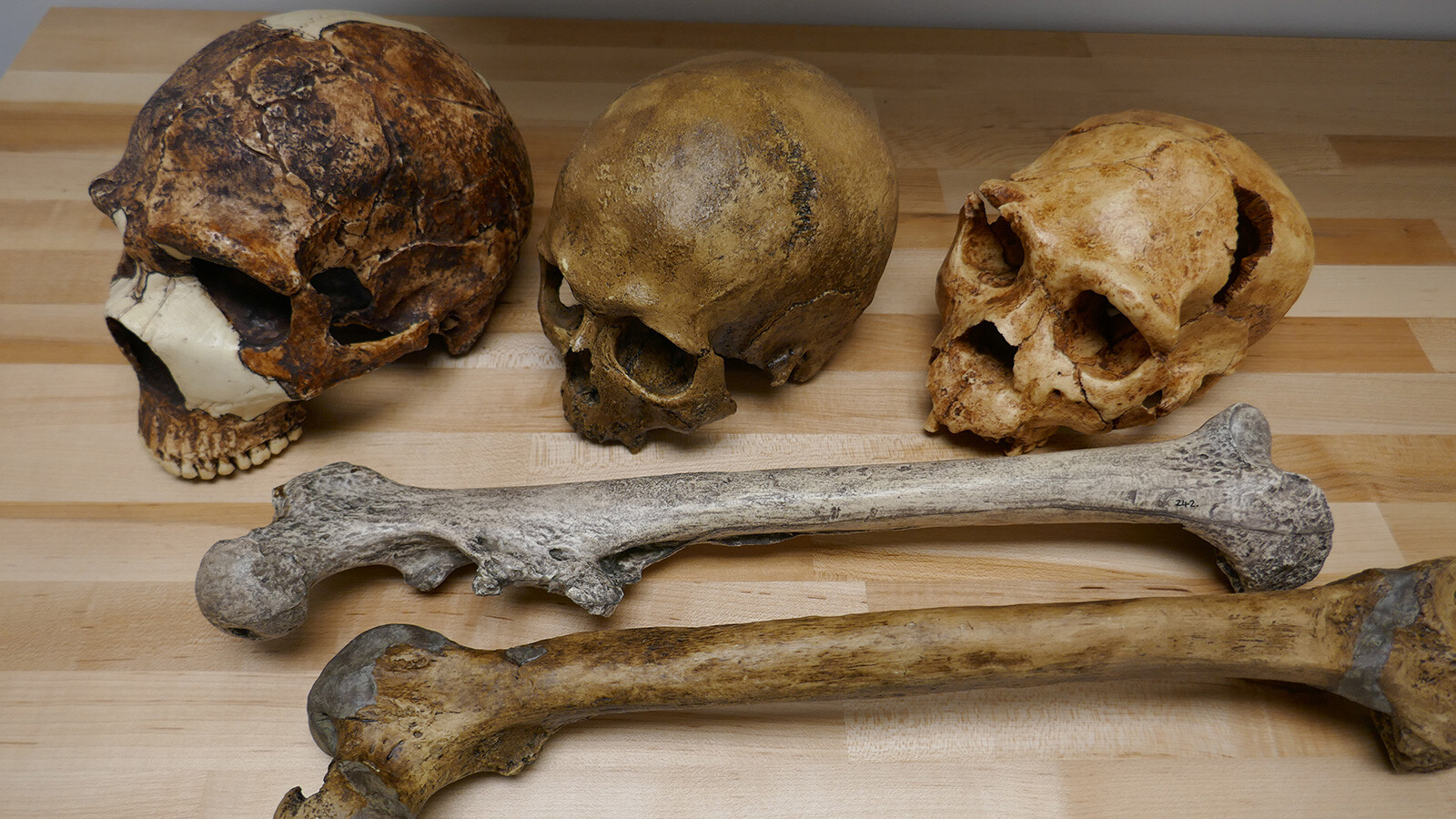 Climate change altered the size of human bodies