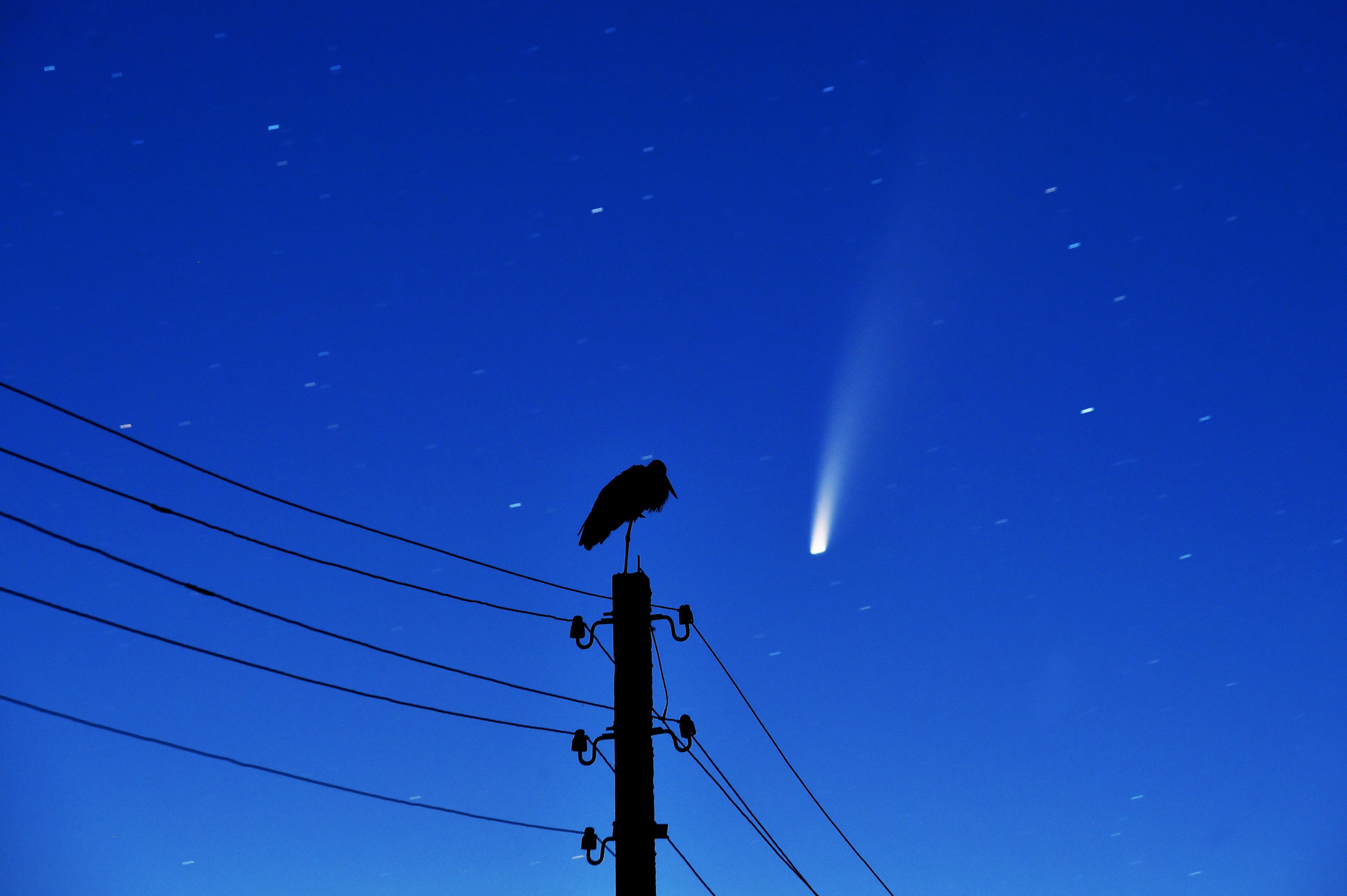 These stunning pictures captured Comet Neowise soaring through the sky. Here's how you can see it for yourself