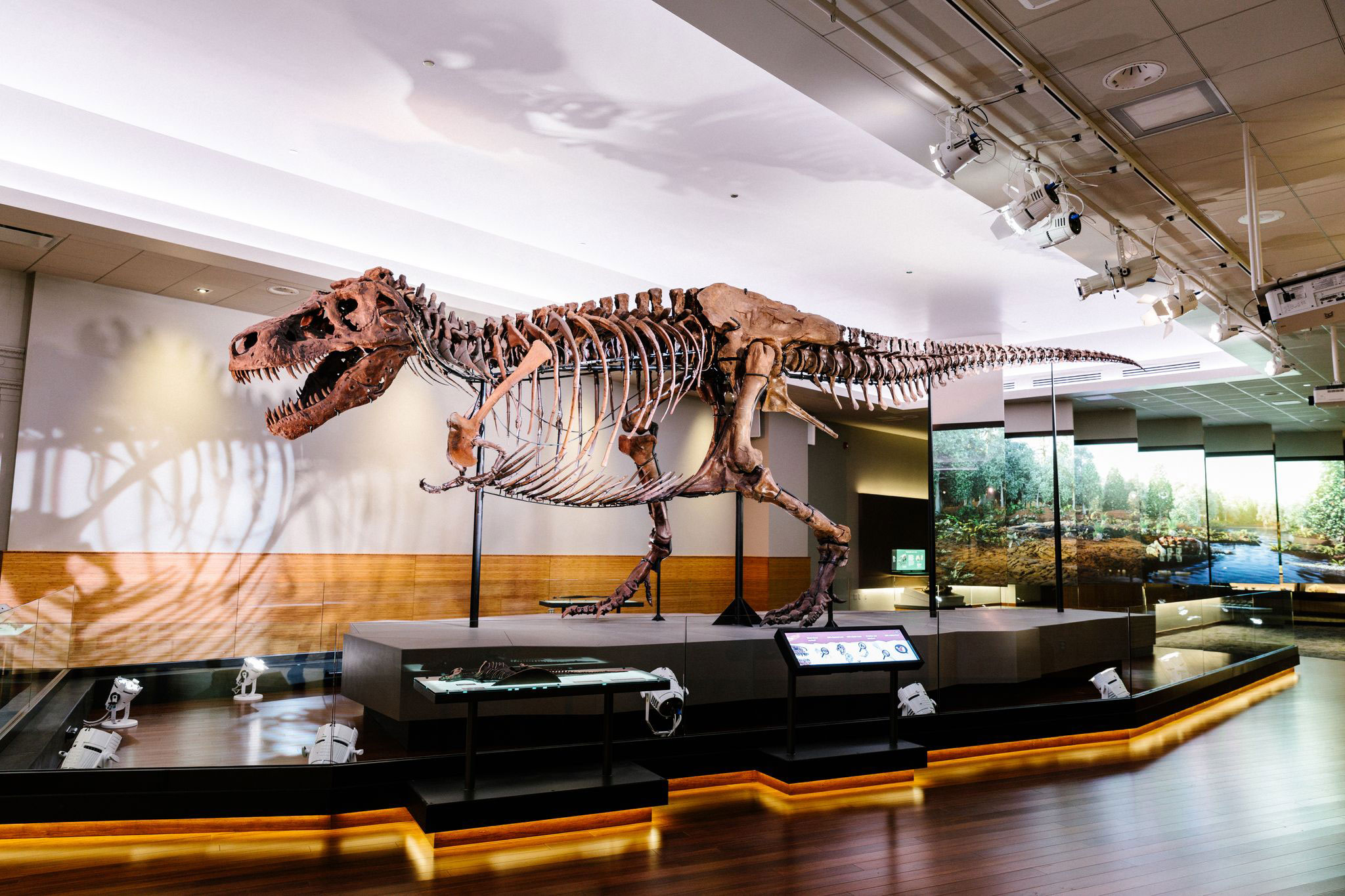T. rex had a teenage growth spurt — but not all dinos did