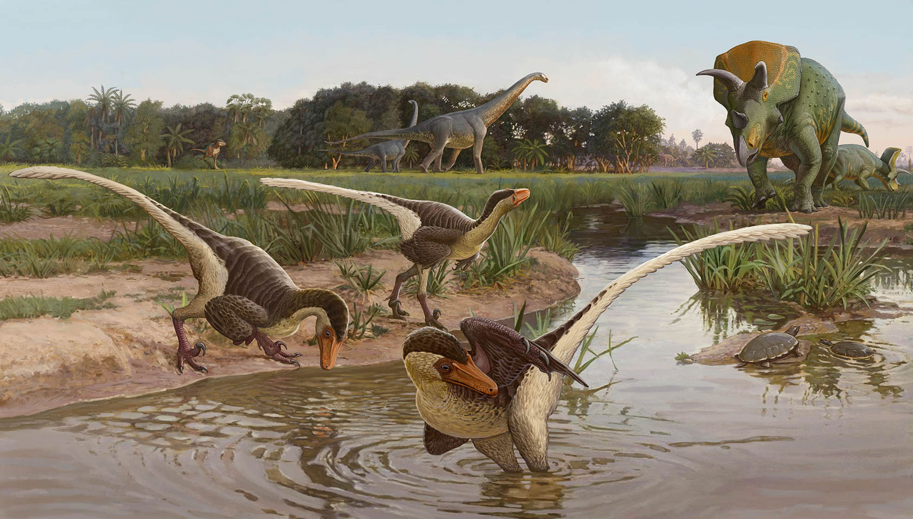 Newly discovered feathered dinosaur was one of the last raptors before extinction