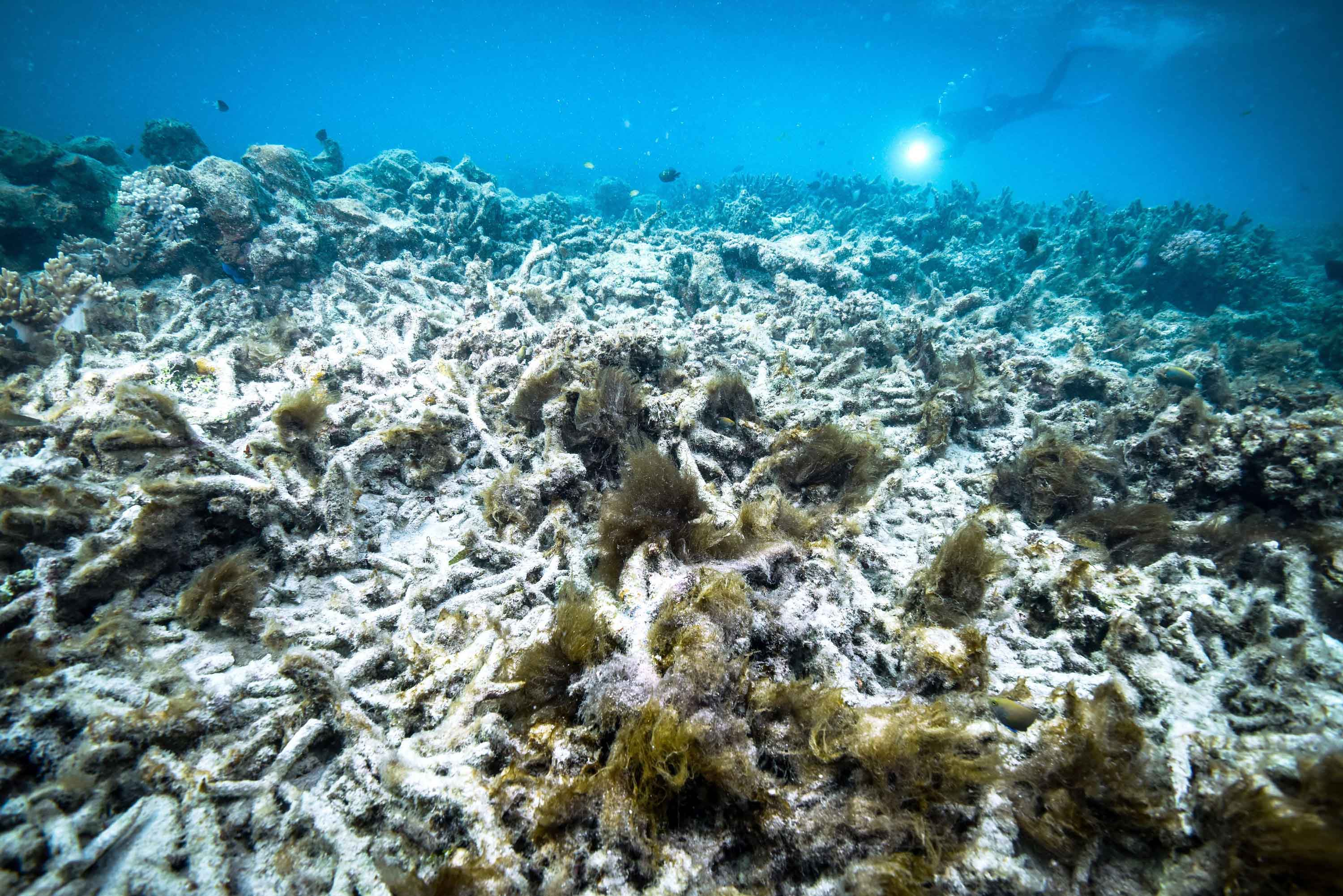 The Great Barrier Reef likely just experienced its most widespread bleaching event on record