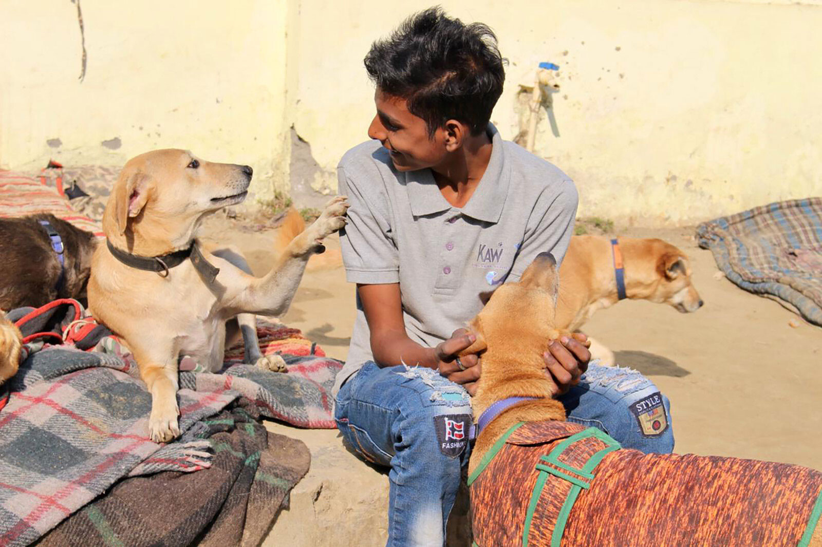 India's stray dogs are being locked out by a US ban on adoptions