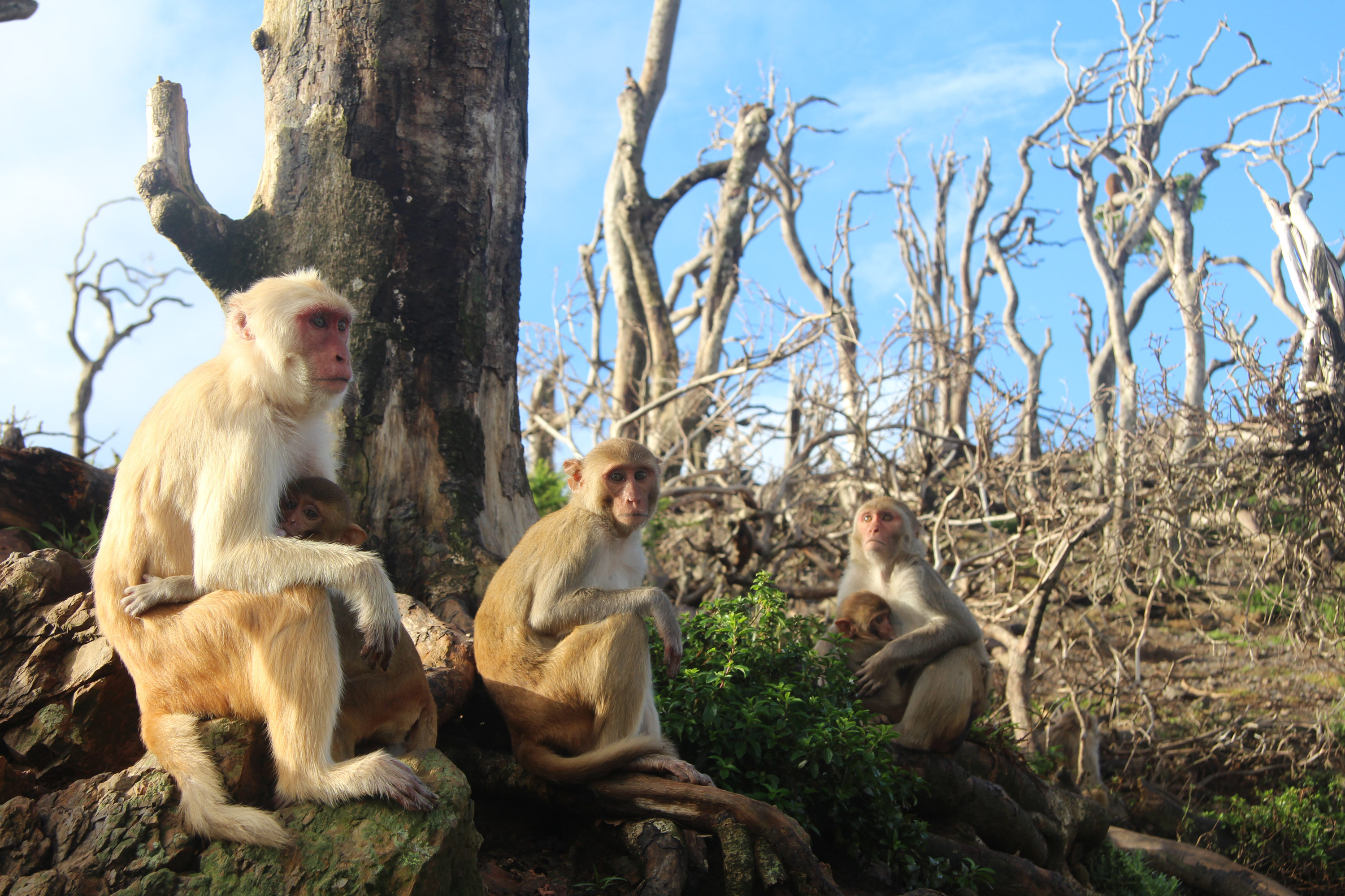 These monkeys formed an unlikely friendship after Hurricane Maria wrecked their home