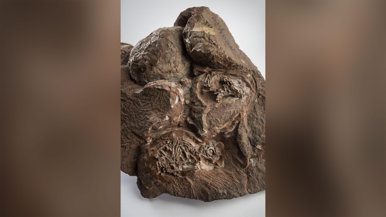 Scientists reconstruct skulls of 200 million-year-old dinosaur embryos in 'unprecedented' 3D detail