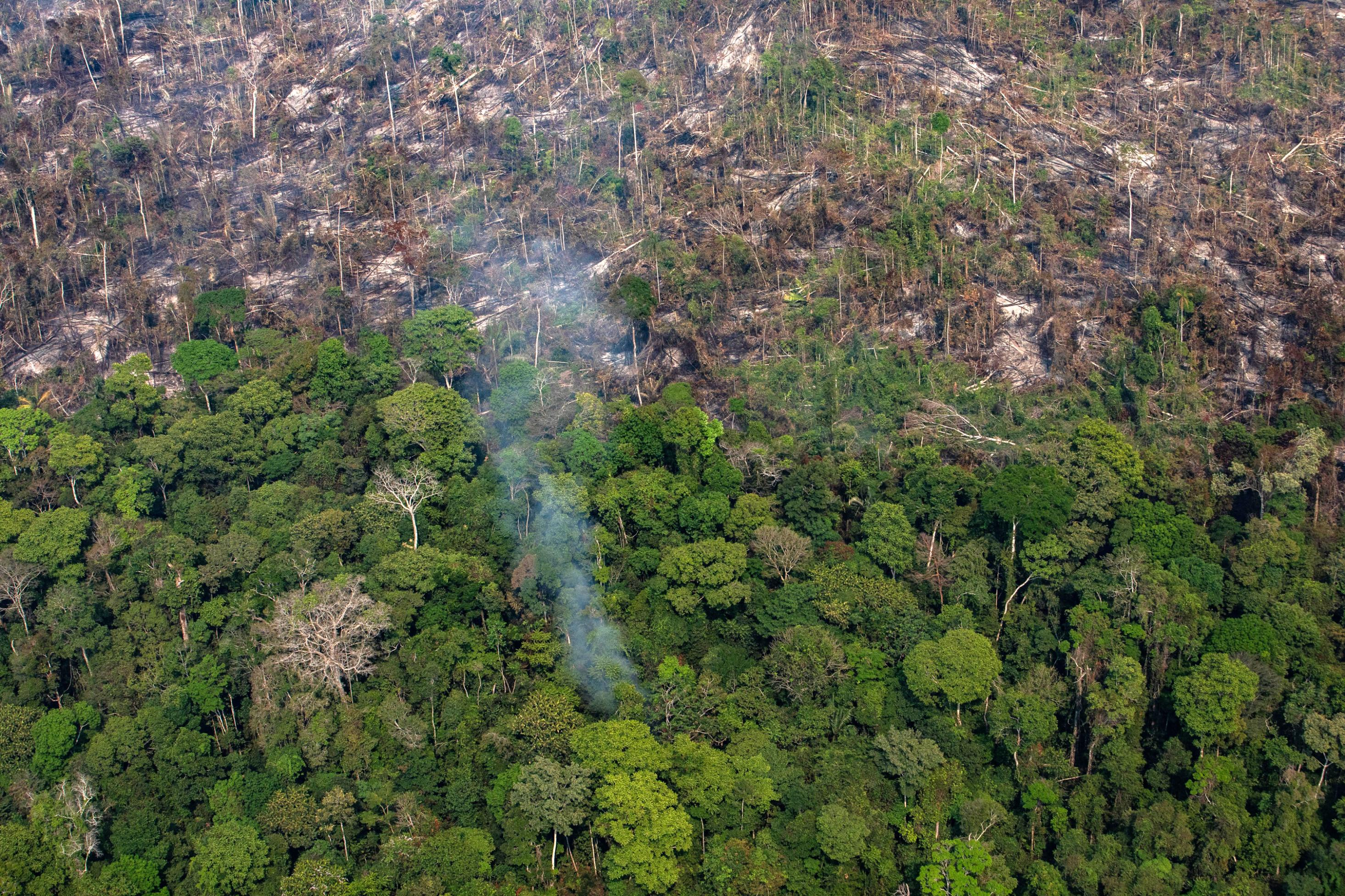 Amazon expert killed with arrow while working to protect uncontacted tribes in Brazil