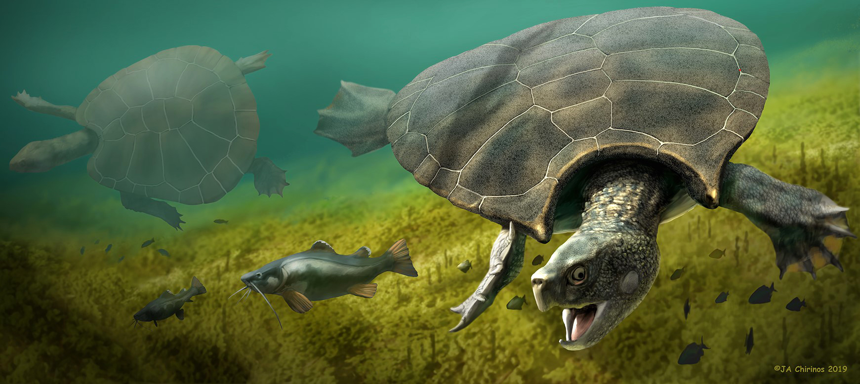 Biggest turtle that ever lived had 10 foot shell with horns